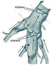 клапаны венозных сосудов яичка